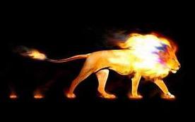 Africa Fire Lion Header Final-002